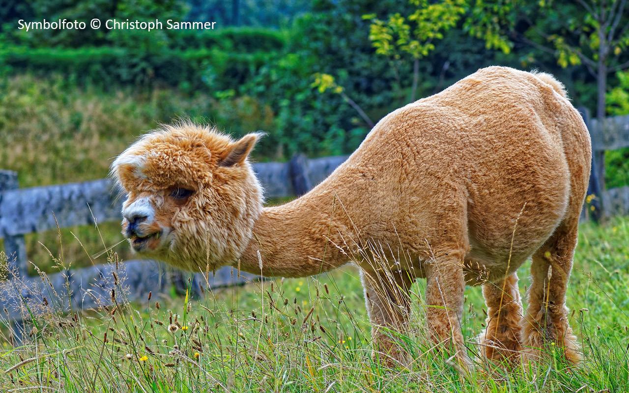 Alpen Wildpark Feld am See, Symbolfoto © Christoph Sammer